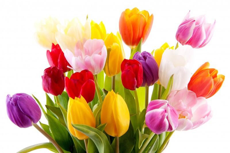 тюльпаны-8 марта